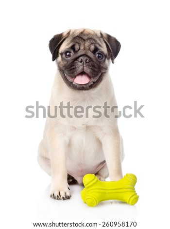 Pug puppy with toy. isolated on white background - stock photo