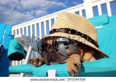 Pug Relaxing on Lawn Chair