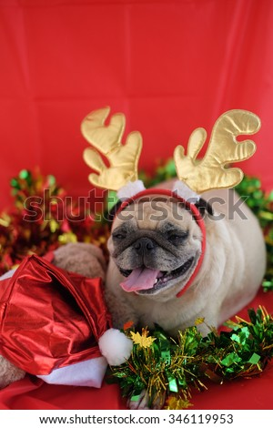 Pug wearing a headband reindeer in Christmas festival .