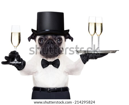 pug with a  champagne glass holding a service tray with two glasses , holding one glass on the other hand - stock photo