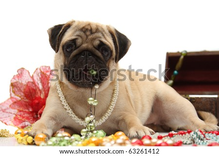 Pug with Glamorous Beaded