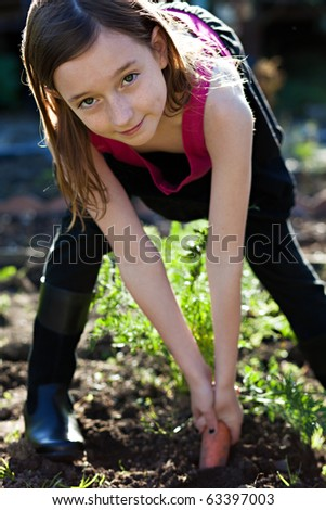 Pulling carrots out of the ground - stock photo