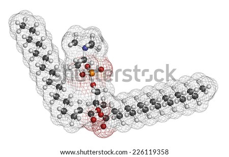 Pulmonary surfactant molecule. Chemical structure of dipalmitoylphosphatidylcholine (DPPC) the major constituent of lung surfactant. Atoms are represented as spheres with conventional color coding. - stock photo
