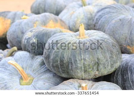 Pumpkin. - stock photo