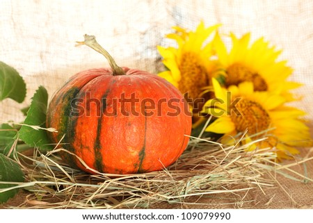 Pumpkin against sunflowers, straw and sackings
