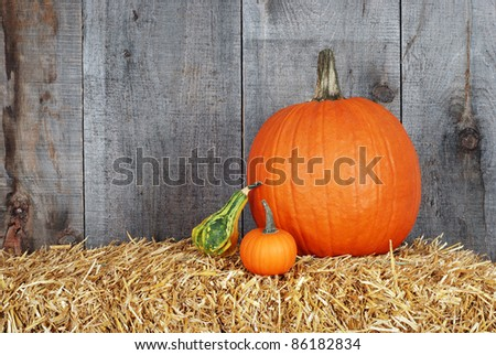 pumpkin and gourds - stock photo