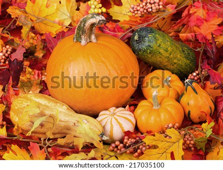 Pumpkin and gourds among colorful autumn leaves