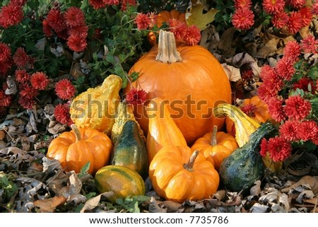 Pumpkin and Gourds in the Garden