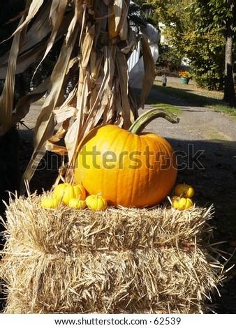 Pumpkin Bale - stock photo