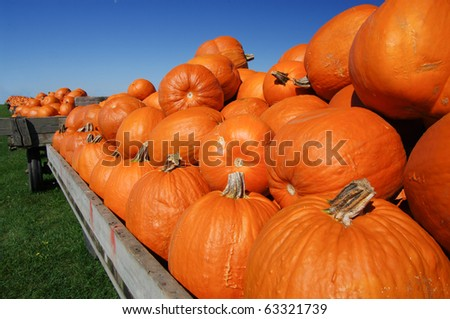 Pumpkin Carts - stock photo