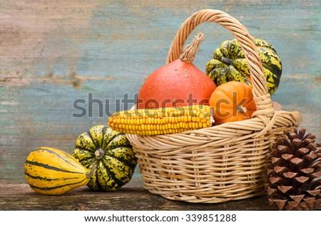 pumpkin fruits at thanksgiving day - stock photo