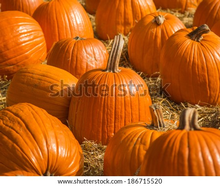 Pumpkin Grouping
