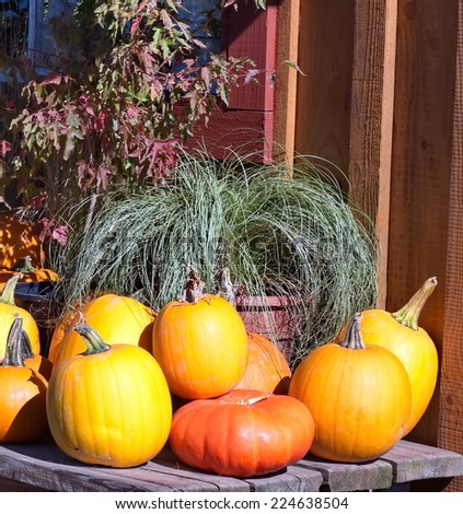 Pumpkin harvest on the table - stock photo