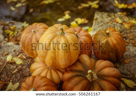 pumpkin in the autumn park