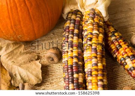 Pumpkin, Indian corn, acorns and leaves fall scene - stock photo