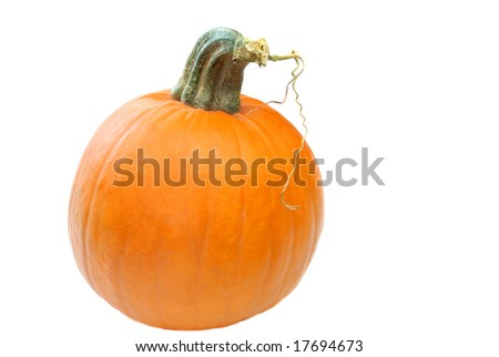 Pumpkin isolated on white with copy space ready for your decorations.