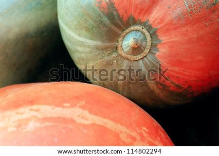 Pumpkin. Macro image. - stock photo