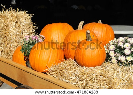 pumpkin on hay with yellow chrysanthemum for Thanksgiving decoration