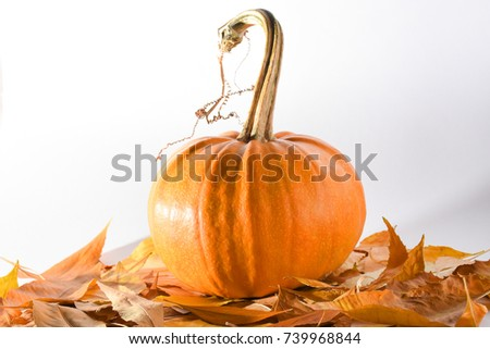 Pumpkin on the autumn leaves isolated on the white background