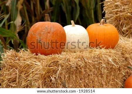 pumpkin on the hay stack