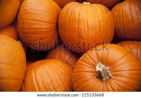 Pumpkin Patch - stock photo