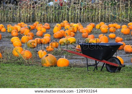 Pumpkin Patch 1 - stock photo