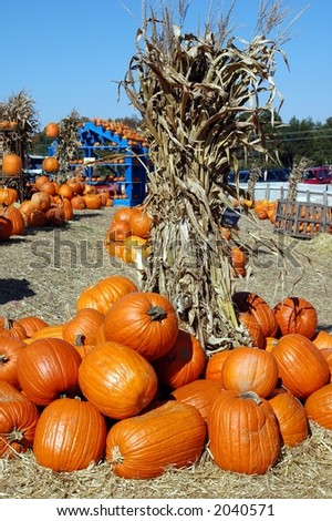 Pumpkin Patch 2 - stock photo