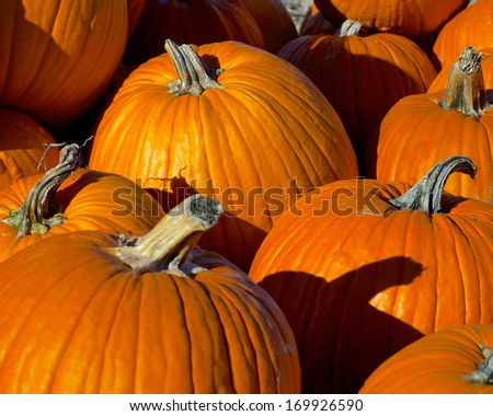 Pumpkin Patch at Harvest Time - stock photo