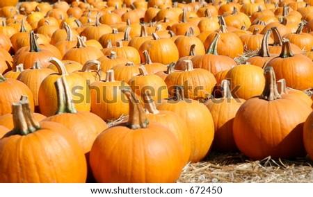Pumpkin Patch Goodies - stock photo
