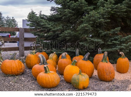 Pumpkin Patch on Bright Fall Day