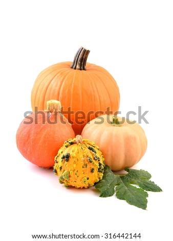 Pumpkin. Pumpkin - Autumn decoration, collection. Pumpkin decoration. Pumpkin vegetables. Pumpkin still life. Pumpkin for thanksgiving. Pumpkin for Halloween.  Pumpkin food.  - stock photo