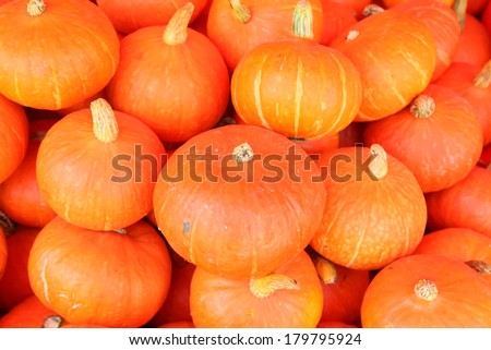 Pumpkin sale on the market