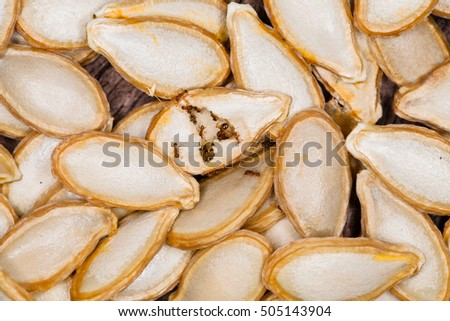 Pumpkin seeds with insect