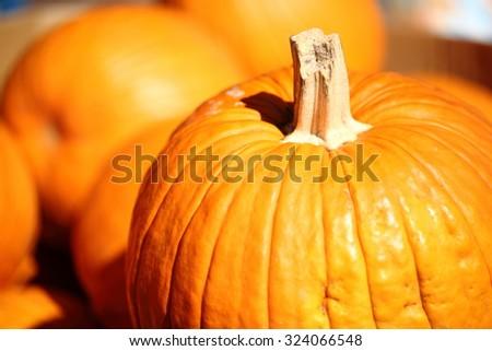 Pumpkin Stalks - stock photo