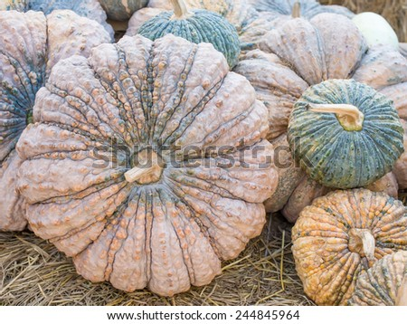Pumpkin Vegetable in Thailand for Healthy Life