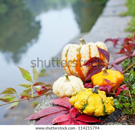 pumpkins and autumn foliage in grass - still life outdoor close garden lake - stock photo