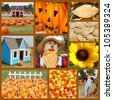 Pumpkins and fall collage - stock photo