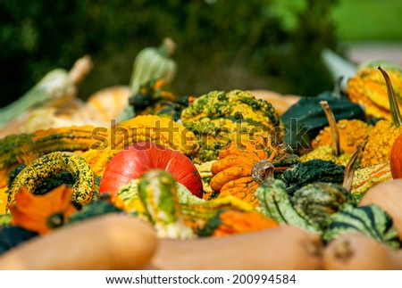 Pumpkins and gourds at fall roadside stand with selective focus - stock photo
