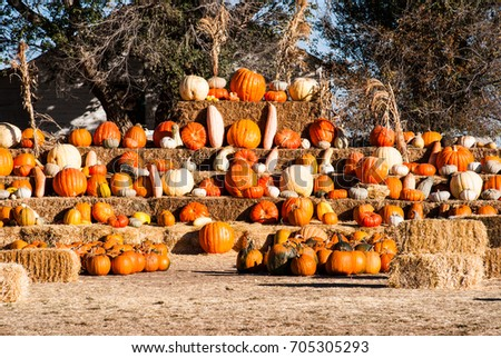 Pumpkins and gourds on display in autumn for Halloween.