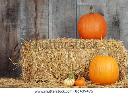 pumpkins and gourds on straw - stock photo