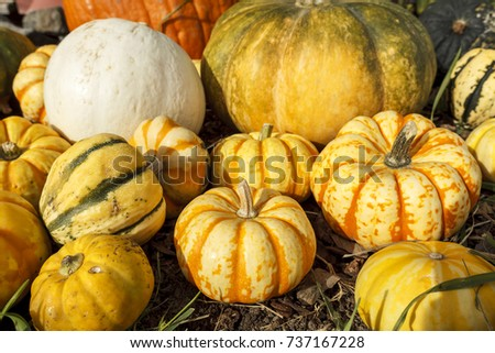 Pumpkins and gourds together in a display during October.