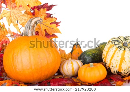 Pumpkins and gourds with autumn leaves on a white background