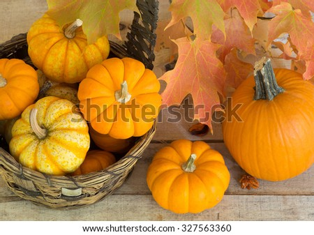 Pumpkins and gourds with colorful fall leaves - stock photo