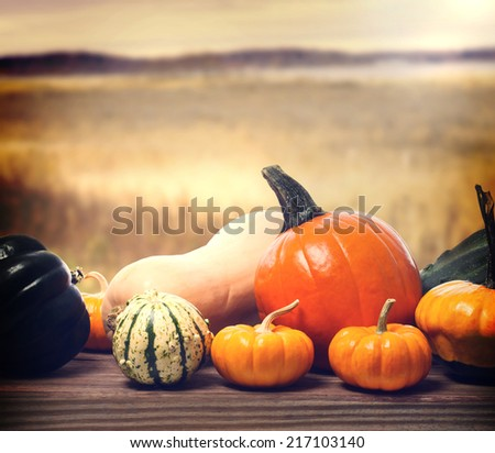 Pumpkins and squashes with autumn brown field background - stock photo