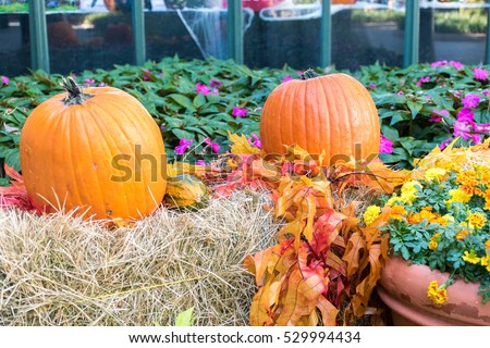 Pumpkins arranged as a decoration