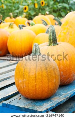 Pumpkins At A Local Farm