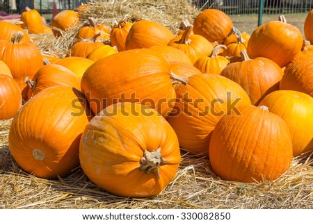 pumpkins at different angles - stock photo
