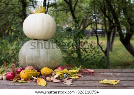 pumpkins autumn arrangament, colored leaf - stock photo
