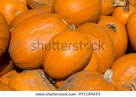 Pumpkins beside a field