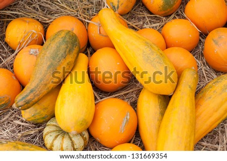 Pumpkins (Cucurbita moschata) picked and set in straw to cure prior to being placed in winter storage. - stock photo